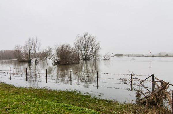 Hoogwater in de IJssel, nabij Zutphen (Gelderland)