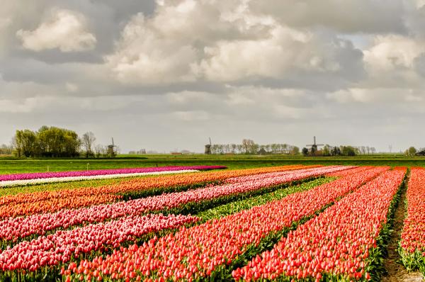 Schermer polder