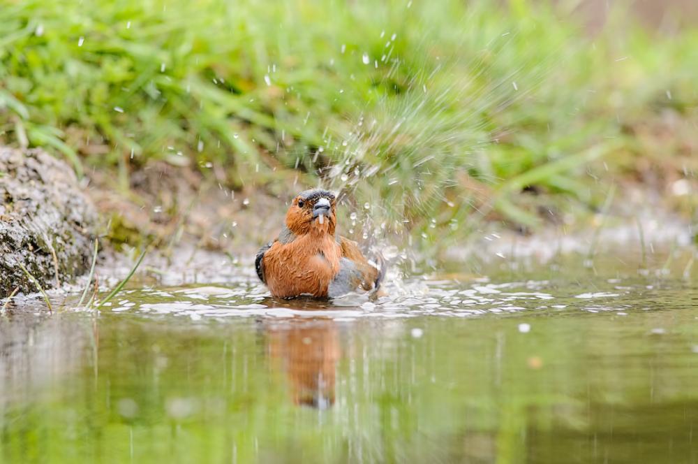 A nice bath