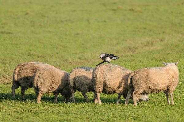 A soft landing !!