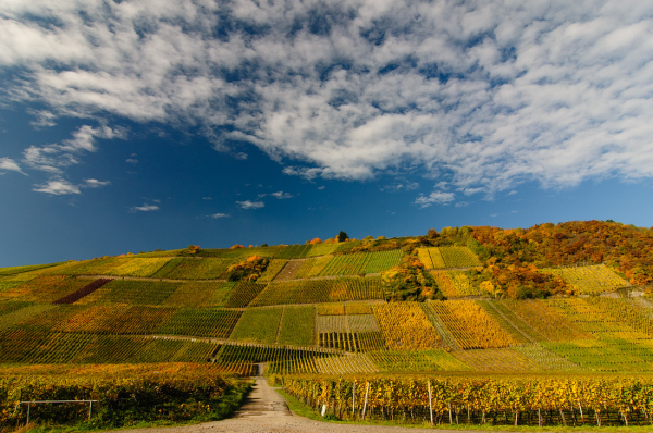 Wijngaarden omgeving Dernau an der Ahr