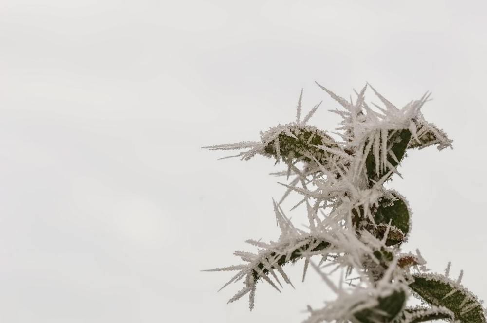 Frost detail