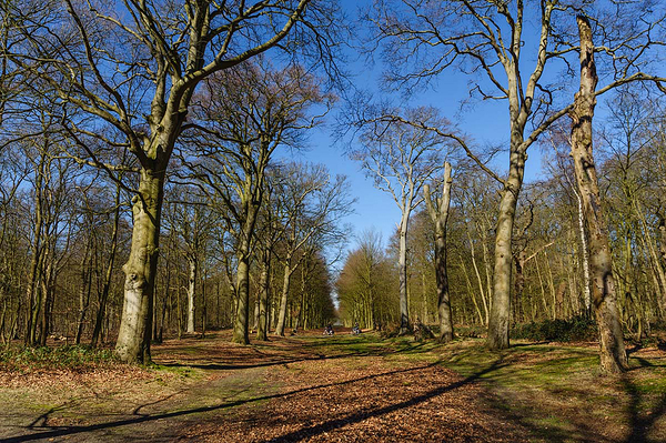 Het Heilooer Bos