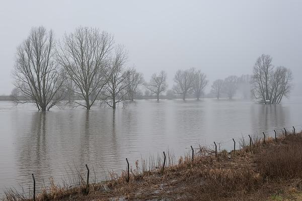 High water in the river IJssel near De Steeg
