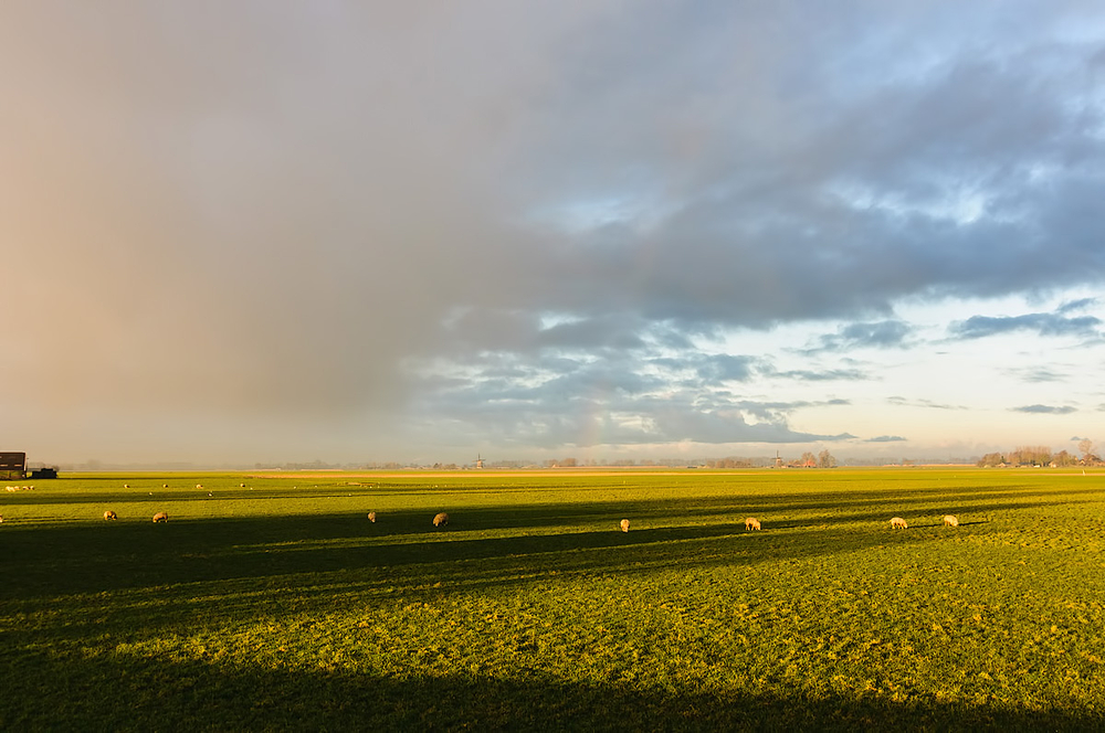 Berkmeer polder