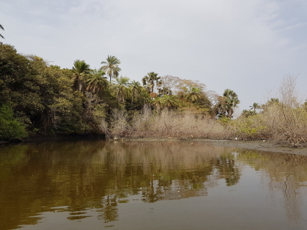 Gambia, Mangrove