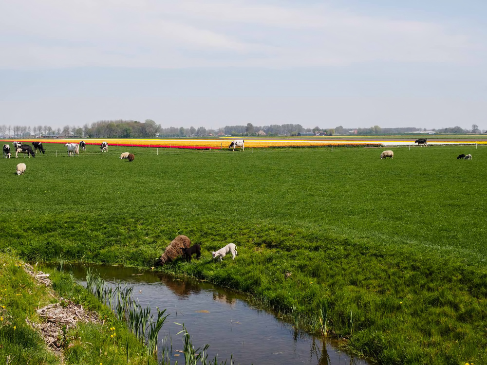 The Netherlands,  ´t Veld