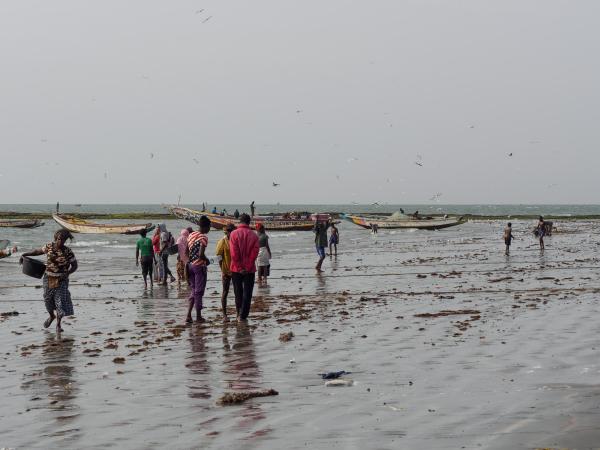 Gambia, Tanji, Fish Market 1/5