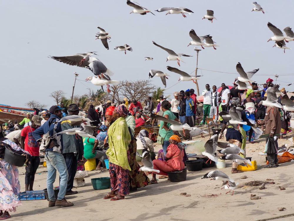 Gambia, Tanji, Fish Market 2/5