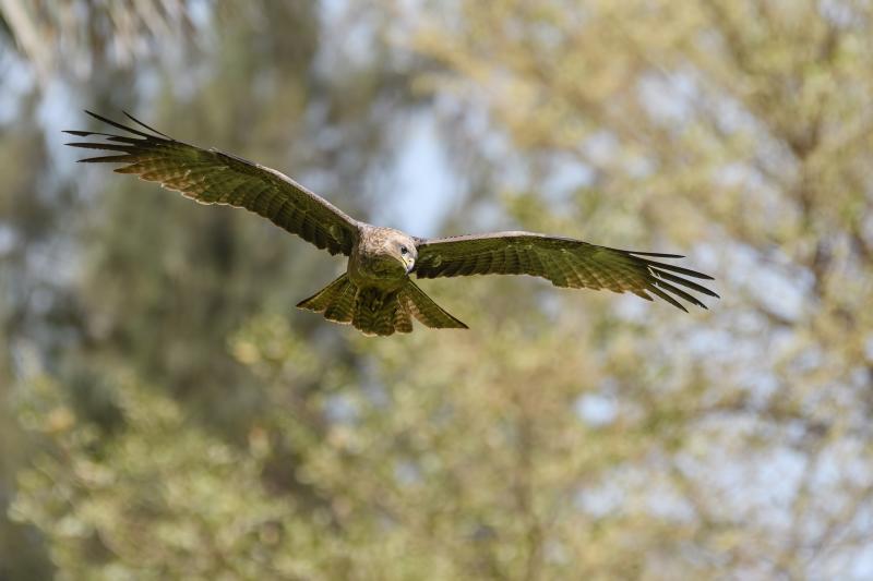 Birds of Gambia