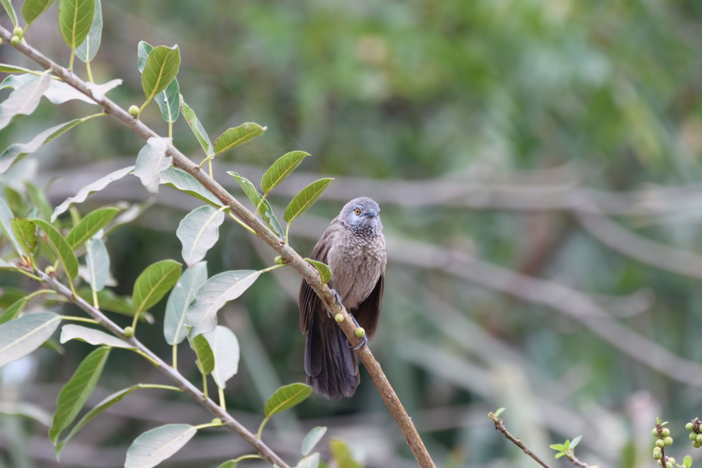 Birds of Gambia