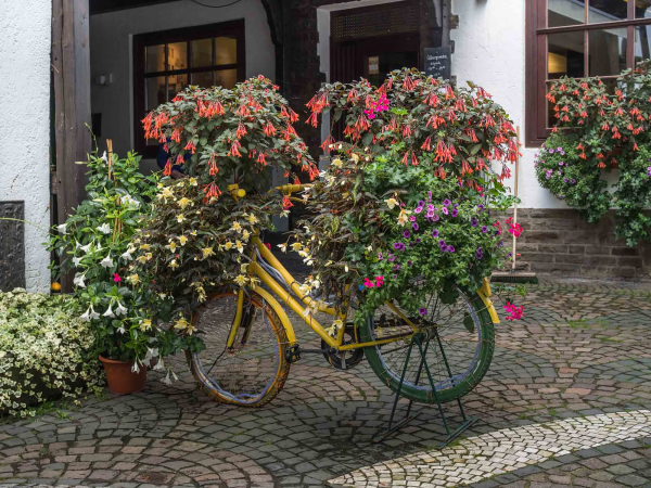 The flower bicycle