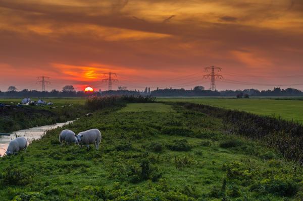 The Netherlands,  Linschoten, Het groene hart