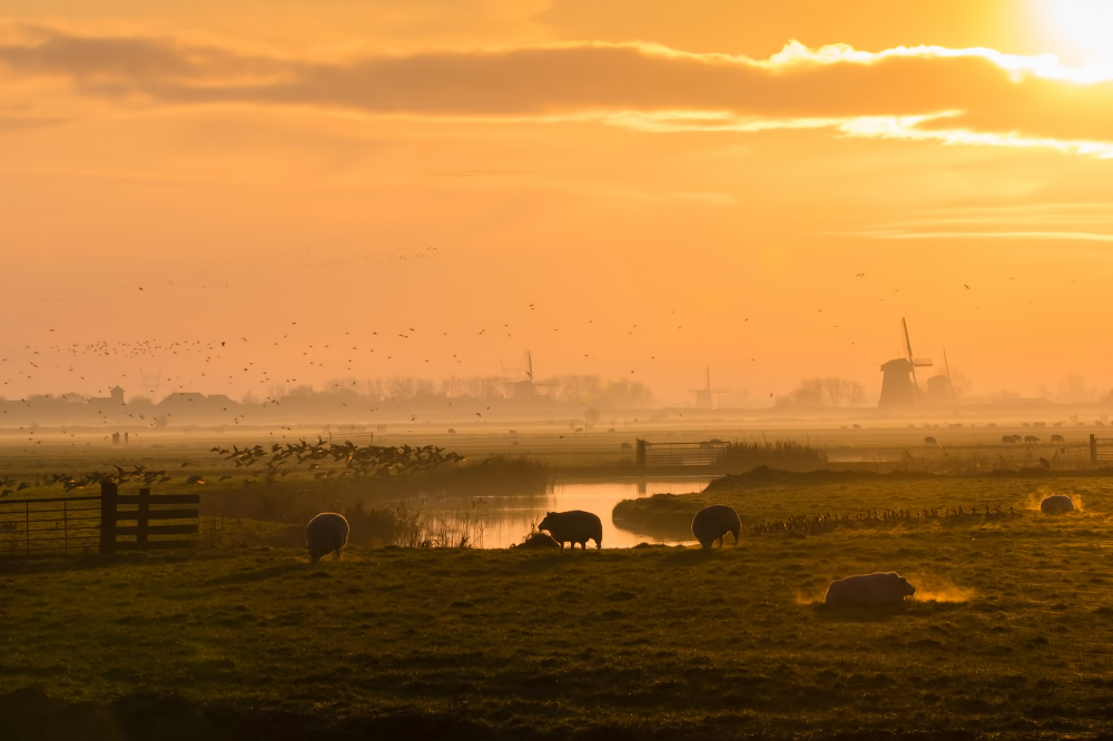 The Netherlands, Mijzenpolder