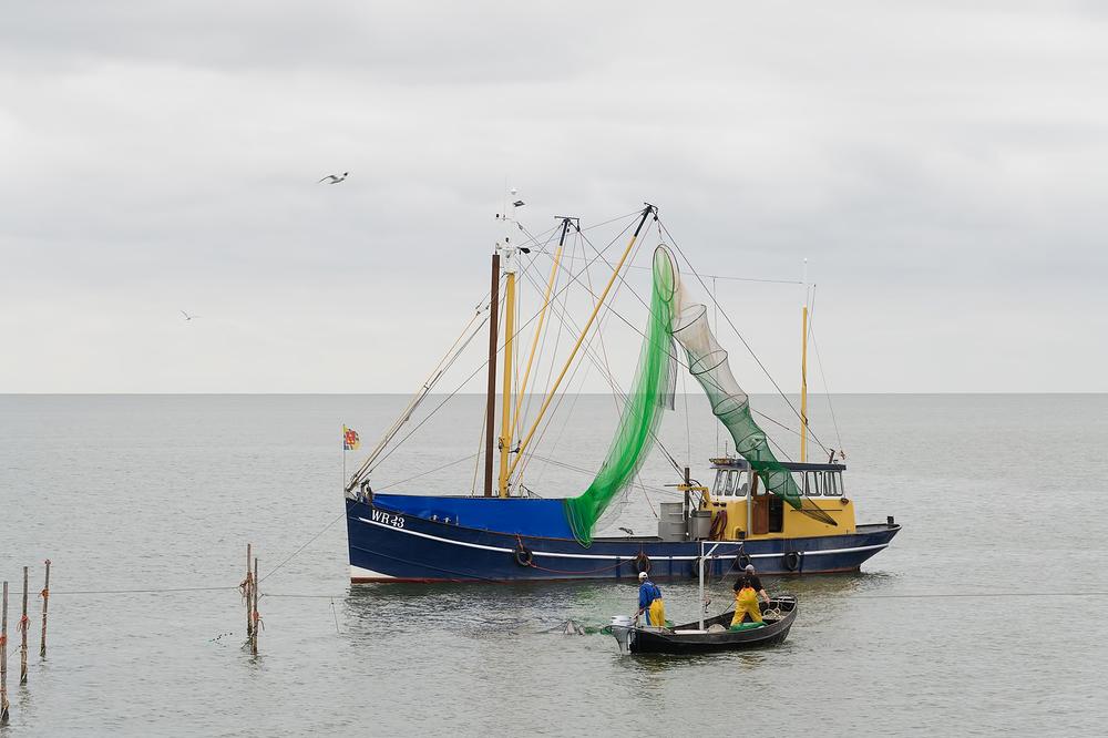 The Netherlands, IJsselmeer ( Palingvisserij )
