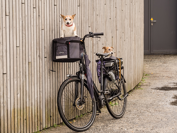 We are ready for a bicycle tour