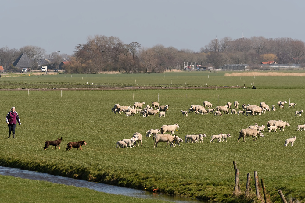 The Netherlands, Hoogwoud