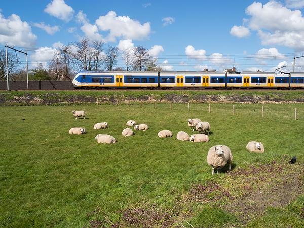 The Netherlands, Alkmaar