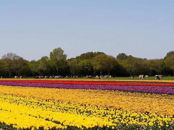 The Netherlands,  Noord-Scharwoude