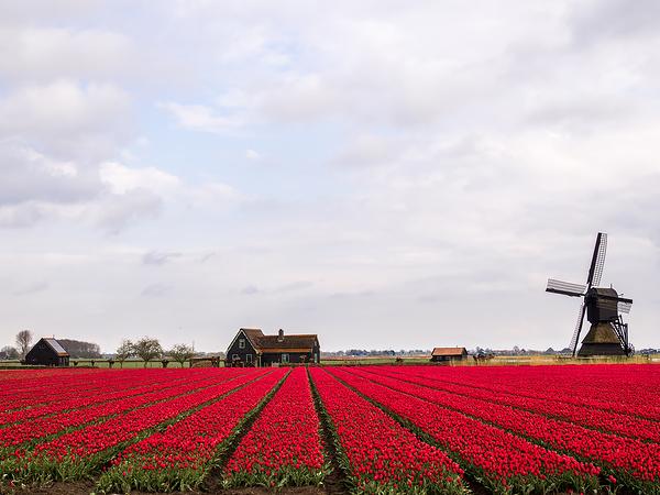 The Netherlands, Obdam,  Molen Weel en Braken