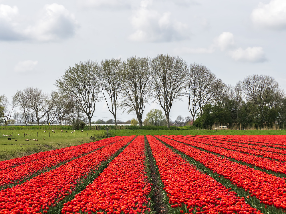 The Netherlands, Oude Niedorp