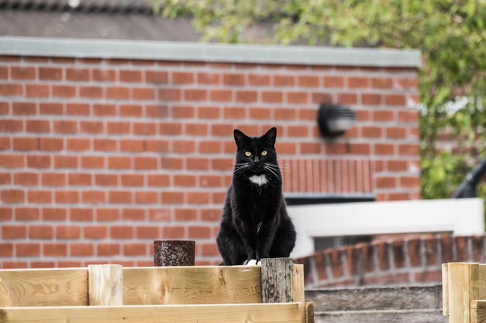 The neighbor's cat