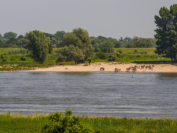 The Netherlands,  River de Waal near Nijmegen