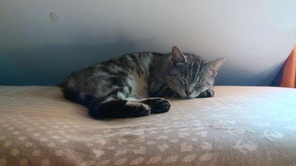 sleepy nap cat