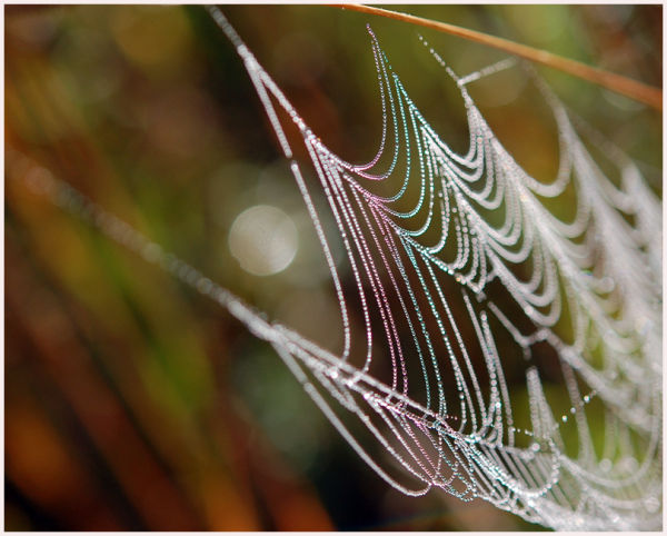 spiderweb with water dew drops