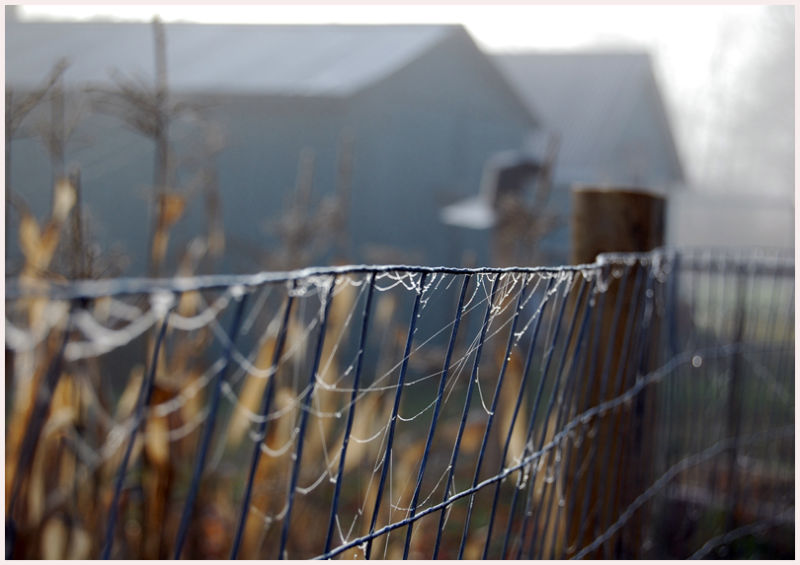 rustic fence with spiderwebs farm dewdrops