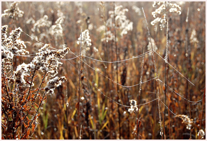 light on spiderwebs in the meadow