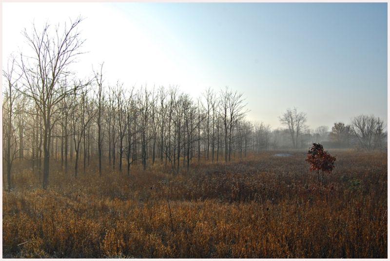 trees in morning mist in autumn