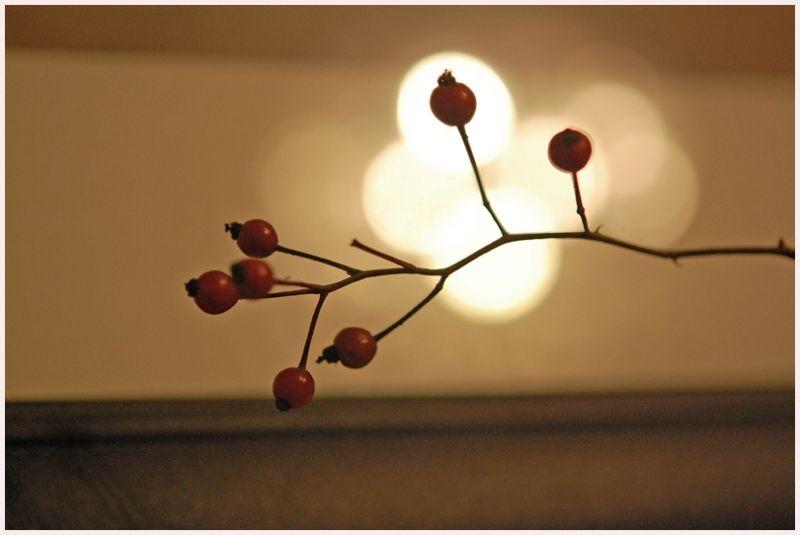 rose hips in still life