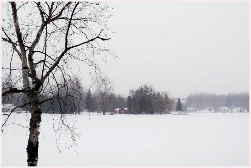frozen lake in snow birch tree