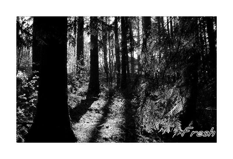 Warming the dark forest