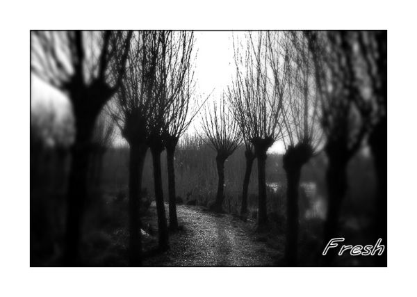 Witches path