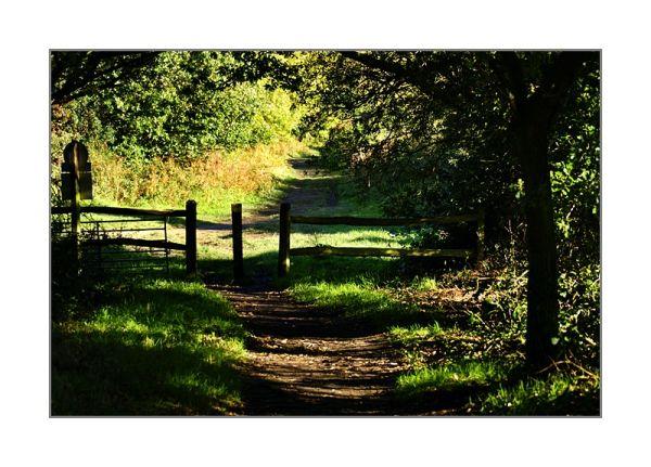 Autumn Walks -1