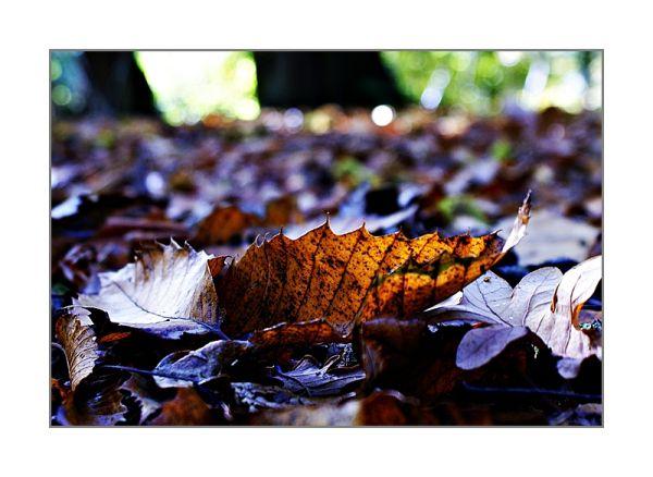 Autumn walks - 6