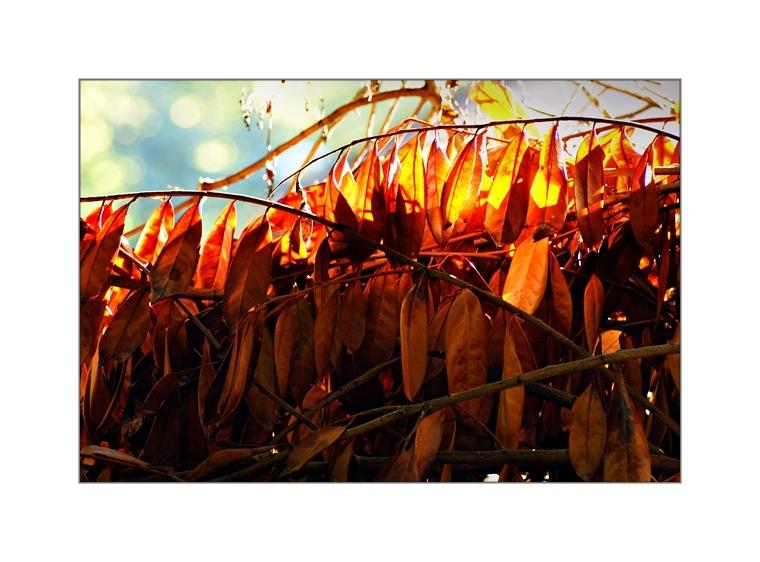 Sun Dried Leaves