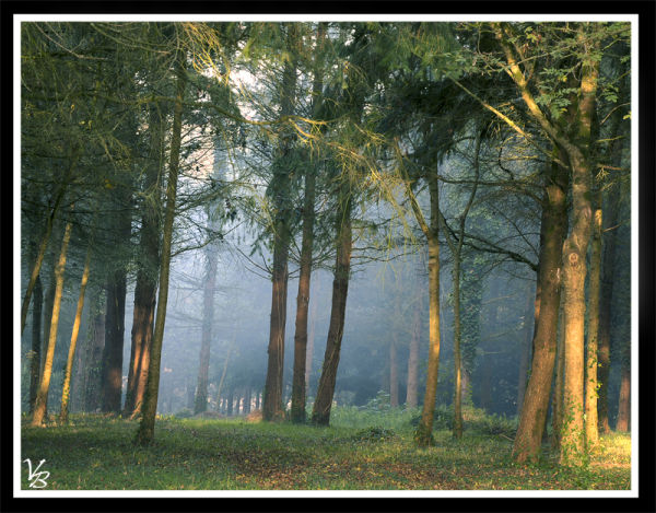 morning in the woods 2