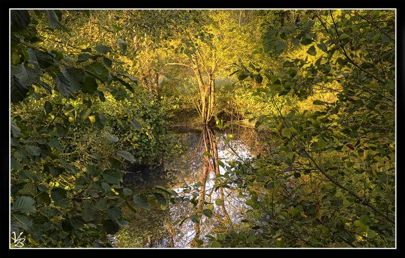 leaves'n water
