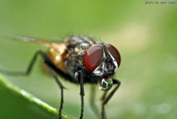 amir noori macro fly
