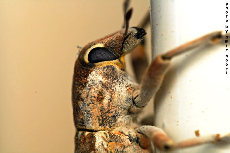 این همونه که تو کارتون فردی مورچه سیاه هستش_