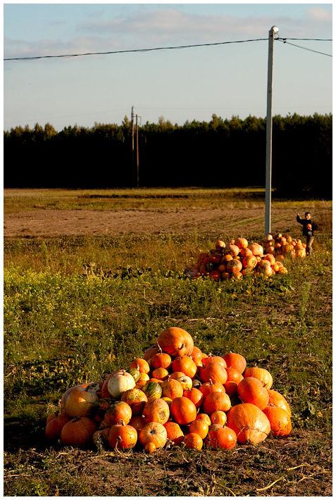 Autumn in belarusian Palessie