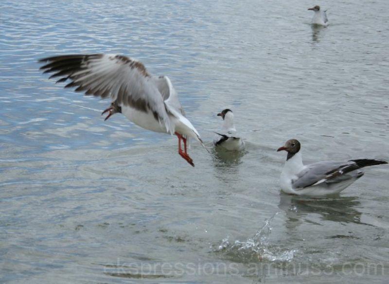 seagull....better luck next time