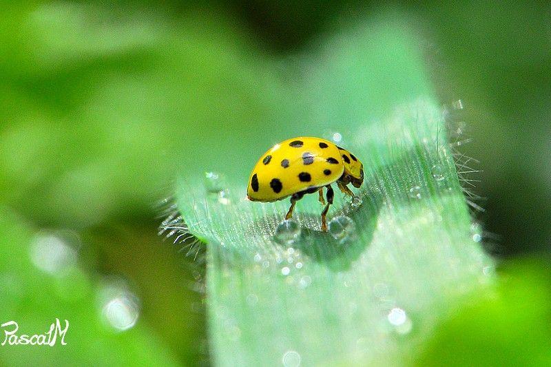 yellow !!!!!!