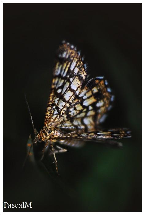poor buttlerfly