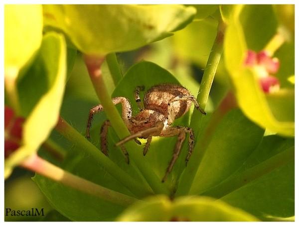 araignée du matin.....