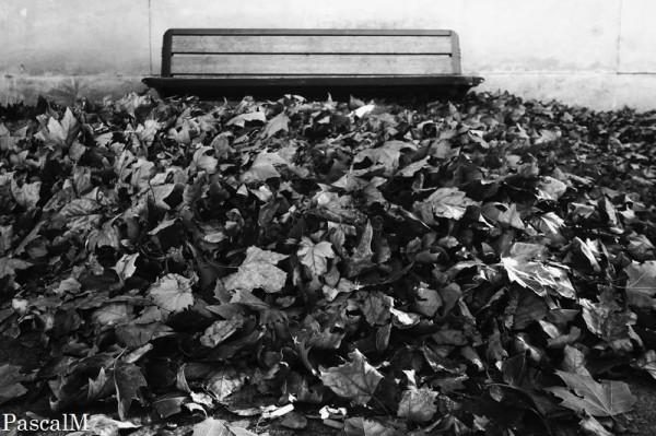 bref, c'est l'automne