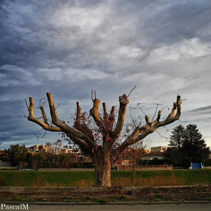 le pays des arbres morts